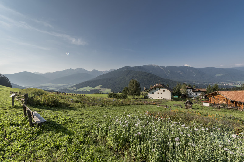 Perca in Val Pusteria