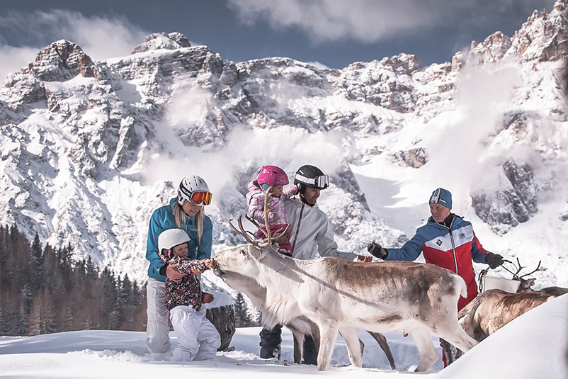 Renne nella ski area Croda Rossa