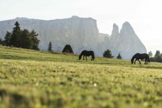 Cavalli con il massiccio dello Sciliar