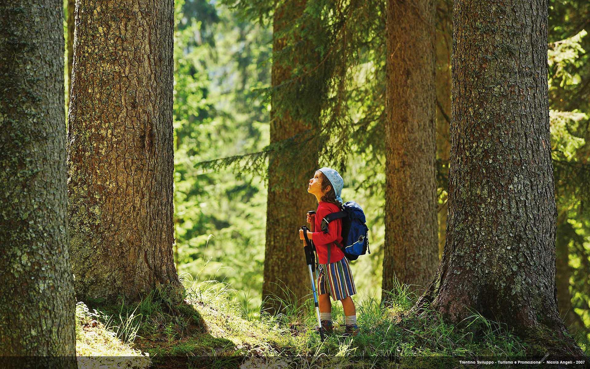 Bambino in mezzo al bosco