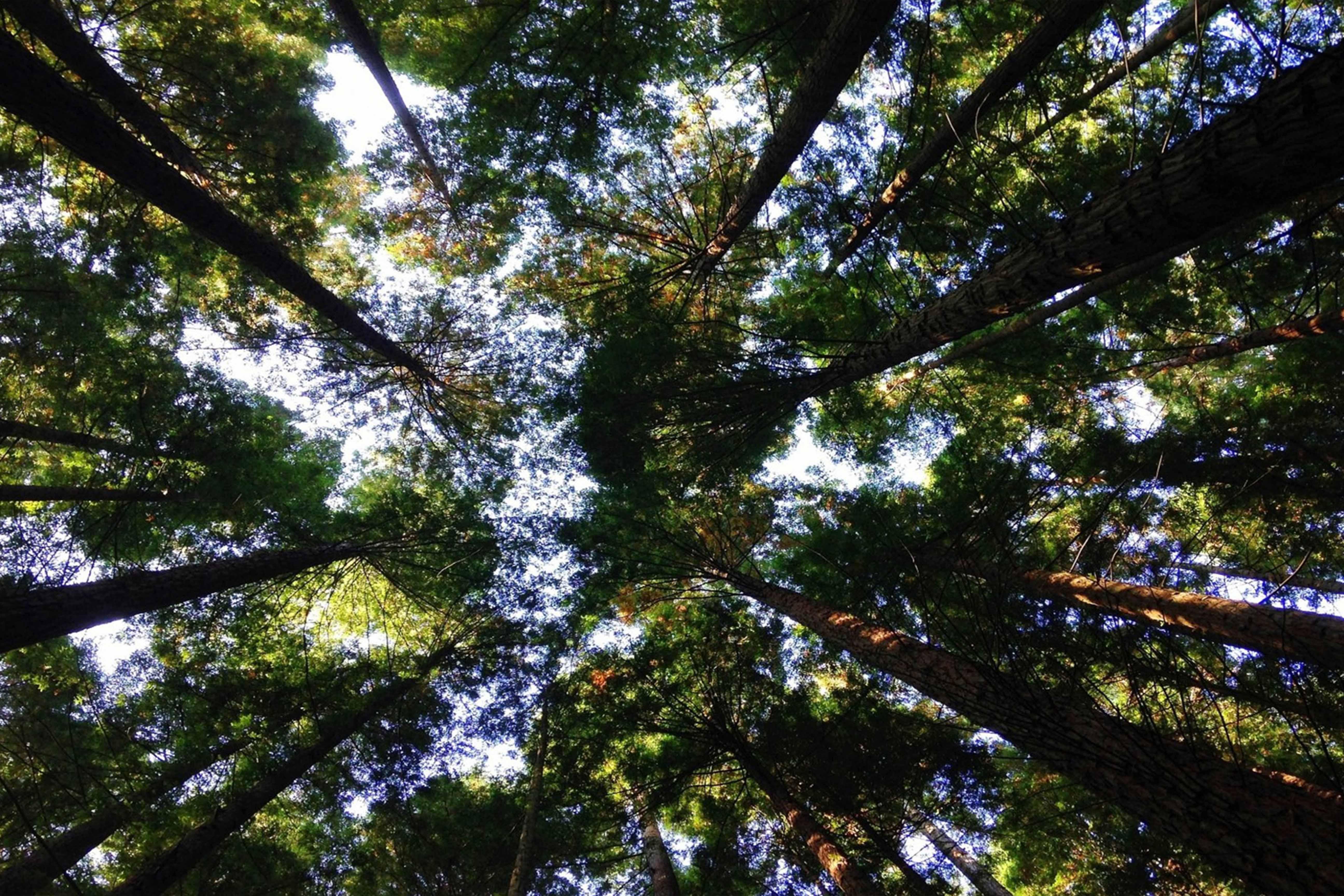 Destressarsi nel bosco